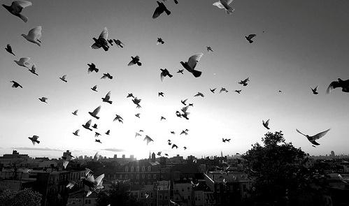 bampw-bird-birds-black-amp-white-black-and-white-Favim.com-426455